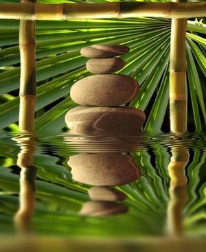 BIENVENUE !! bambou