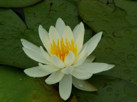 Fleur_pascale_4_3