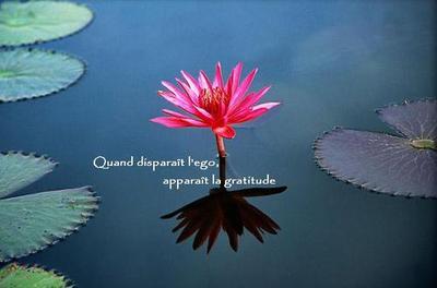 Lotusgratitude